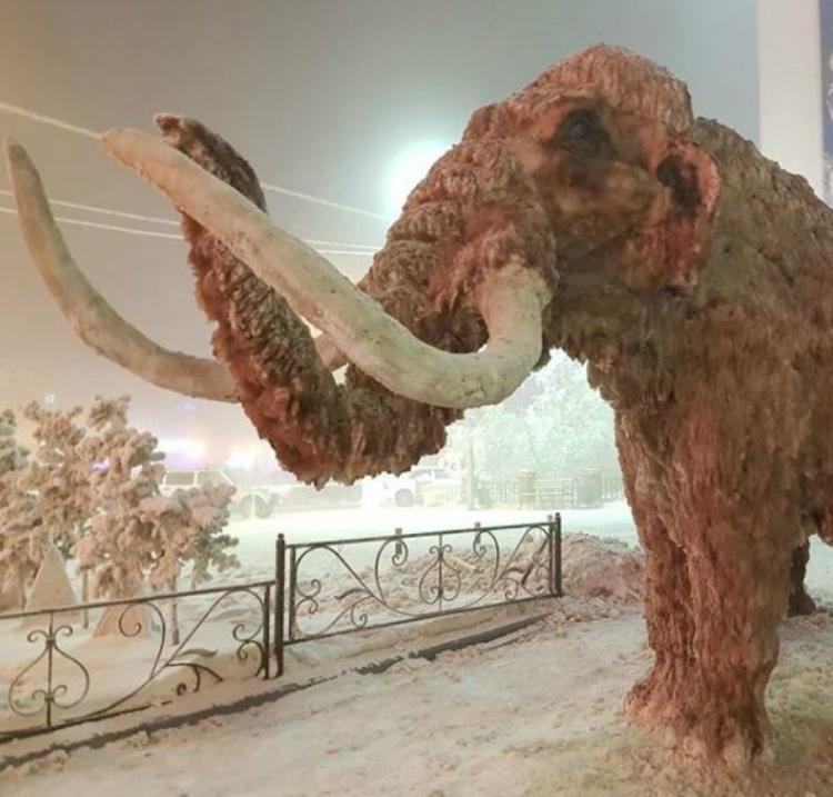 oymyakon mammoth
