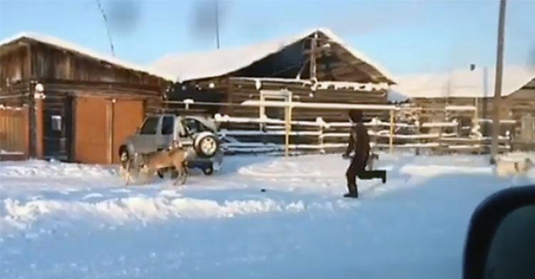 hunters save deer