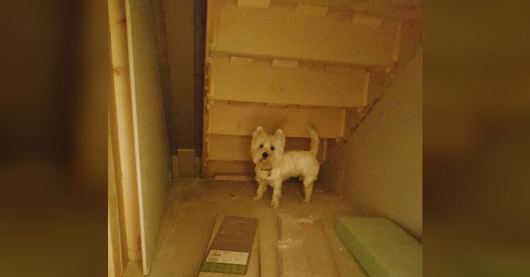 Dad Discovers Empty Space Under Stairs U0026 Crafts Genius Doggy Bedroom.