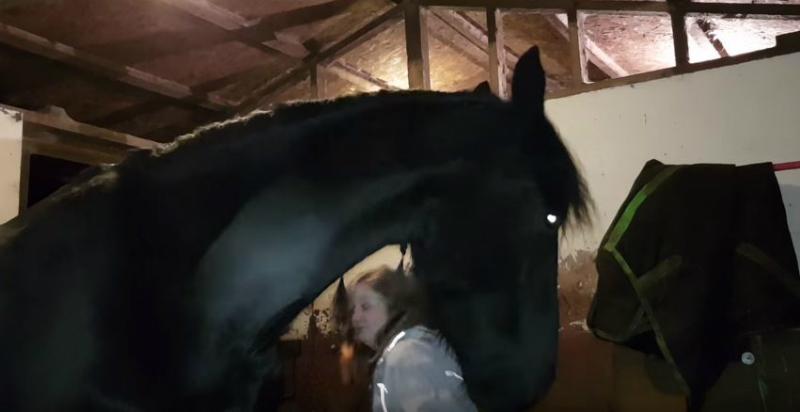 horse nudge