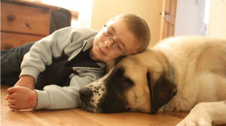 Image result for boy and dog