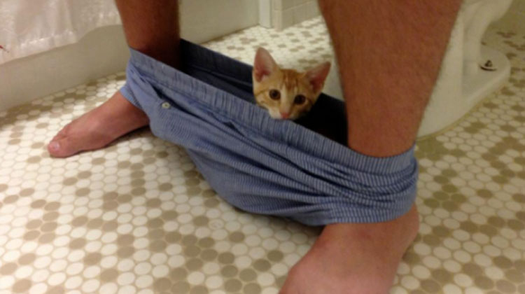 cat in underwear on toilet