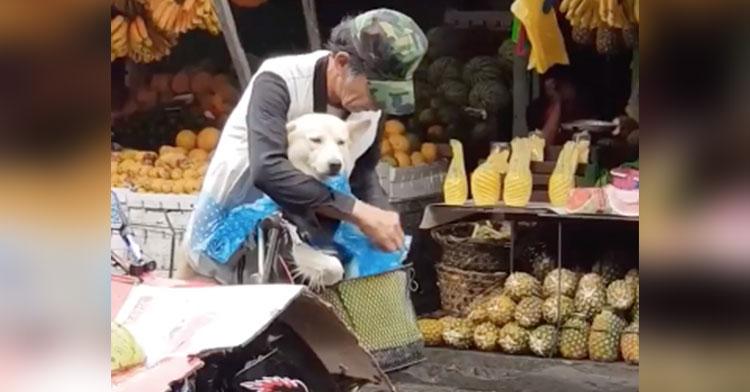 man puts raincoat on dog