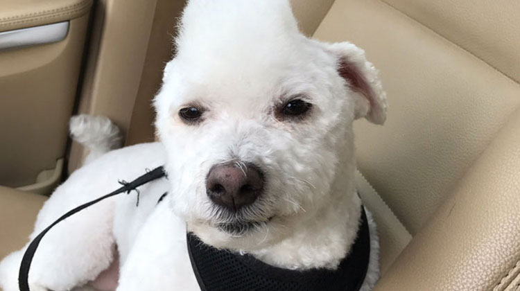 Dad Tells Groomer To Give Dog New Look But Ridiculous Haircut Has