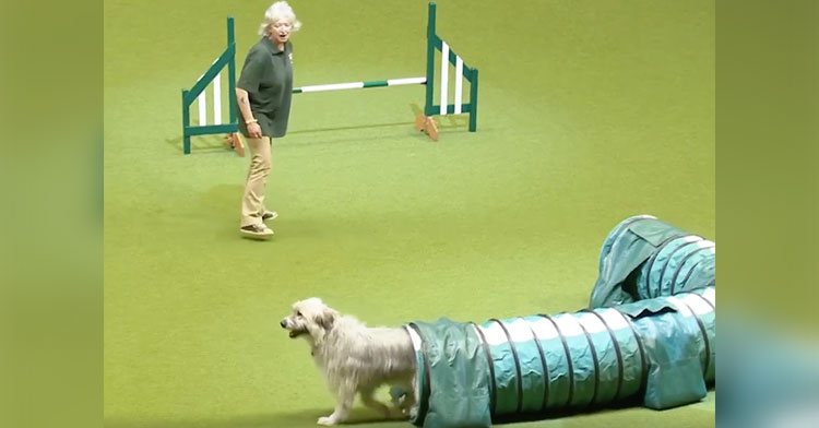 kratu at crufts agility