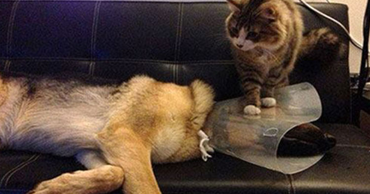 21 Times Cats Proved They Were Real Jerks– InspireMore