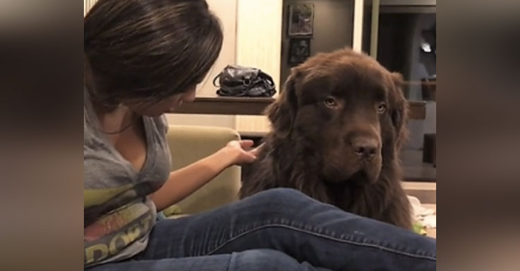 Salty Dog Is Mad At Mom & Refuses To Forgive Her In Hilarious Home Video.