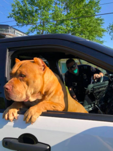 pit bulls and police