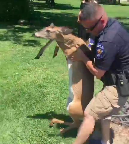 texas lake deer rescue