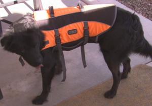 smokey, remus, drowning, mesa, rescue, life jacket