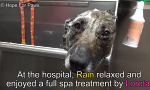 rain spa treatment