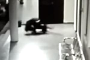 dog attacks leopard