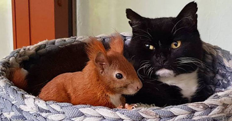 Squirrel Falls From Roof Amp Is Adopted By Cat Inspiremore