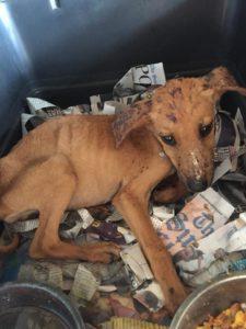 puppy captured