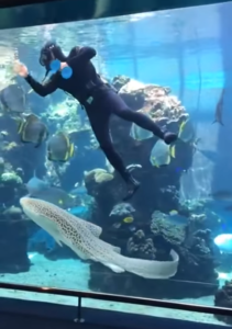 diver scrubbing aquarium