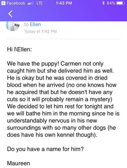 elliot puppy