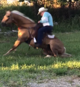 horse getting to feet