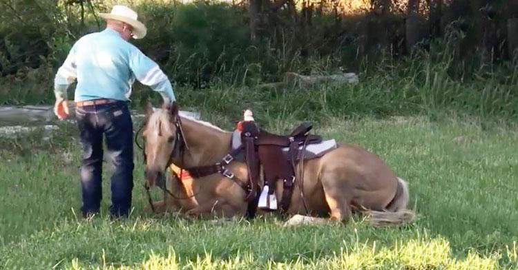 HORSE LAYS ON GROUND