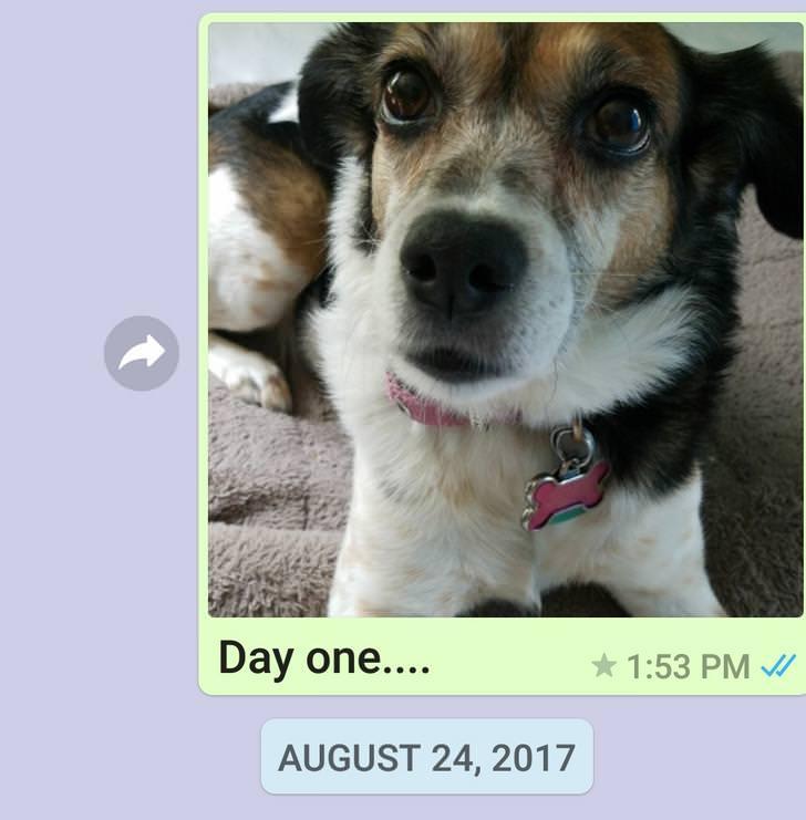 dog a day photos