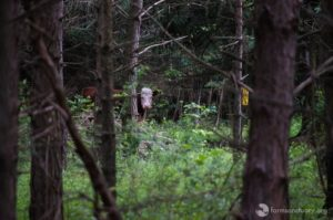 bonnie hiding in forest