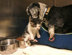 dog carrying kitten