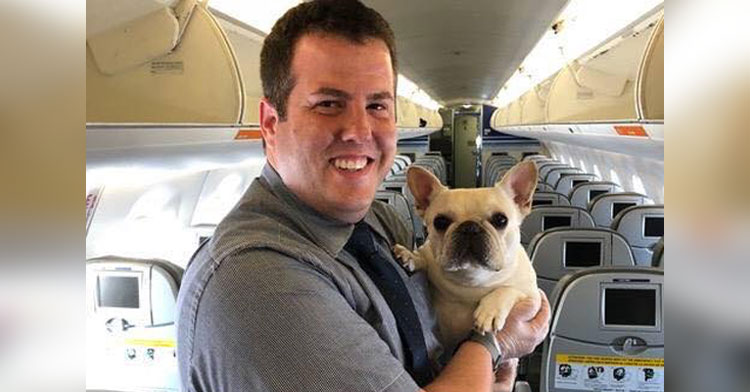 darcy frenchie on jetblue flight