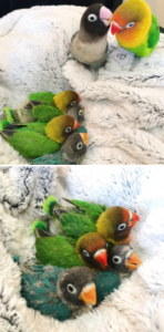 babies with feathers