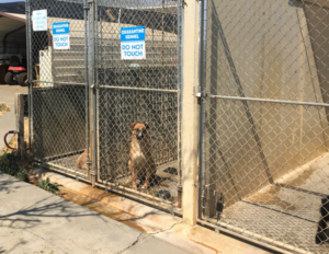 spca dogs rescued