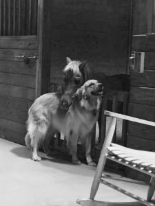 sammy and molly