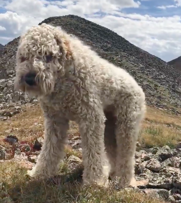 Family Dog Bolts After Fatal Car Accident In Colorado - InspireMore