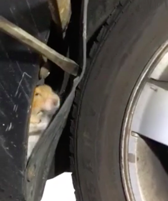 hamster in wheel well