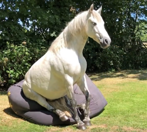 horse and beanbag