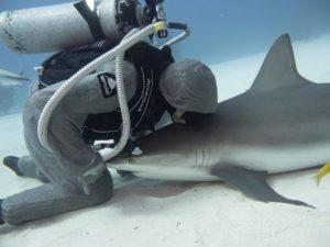 cristina zenato kisses shark