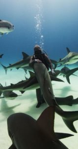 cristina zenato shark swarm