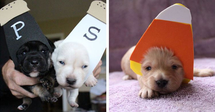 Texas Farmers Hand Make Tiny Halloween Costumes For Puppies