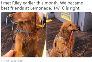 riley lemonade