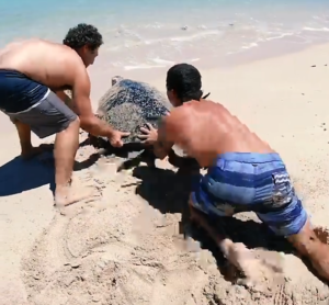 men help sea turtle