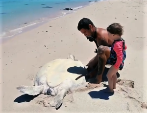 stranded sea turtle