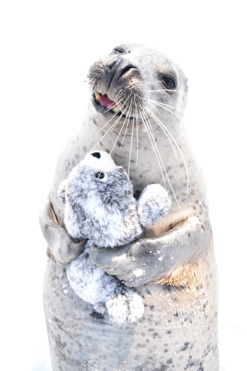 seal stuffed toy