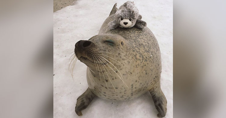stuffed seal