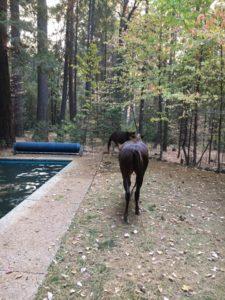 horse-rescued-camp-fire