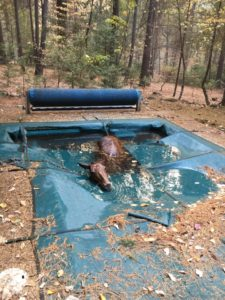 horse-trapped-in-pool
