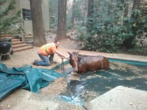 rescuers-and-horse