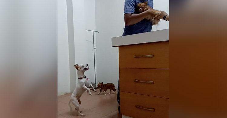 dog jumping vet