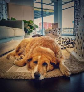 IKEA-dog-rug