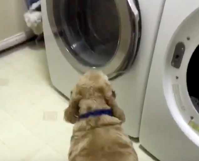 how to clean stuffed animals in dryer