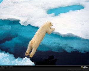 polar-bear-jumping