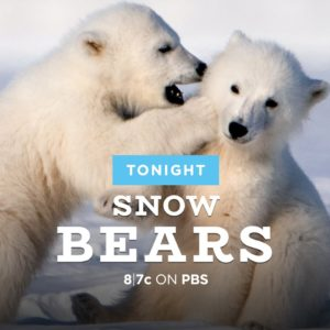 snow-bears-advertisement