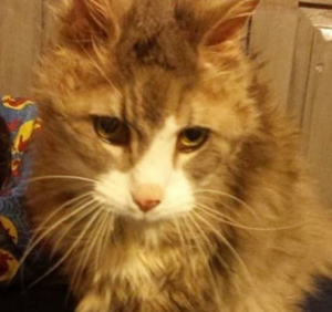 chester-hospice-cat