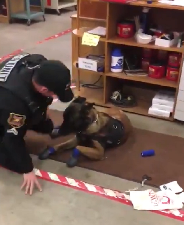 jary police dog